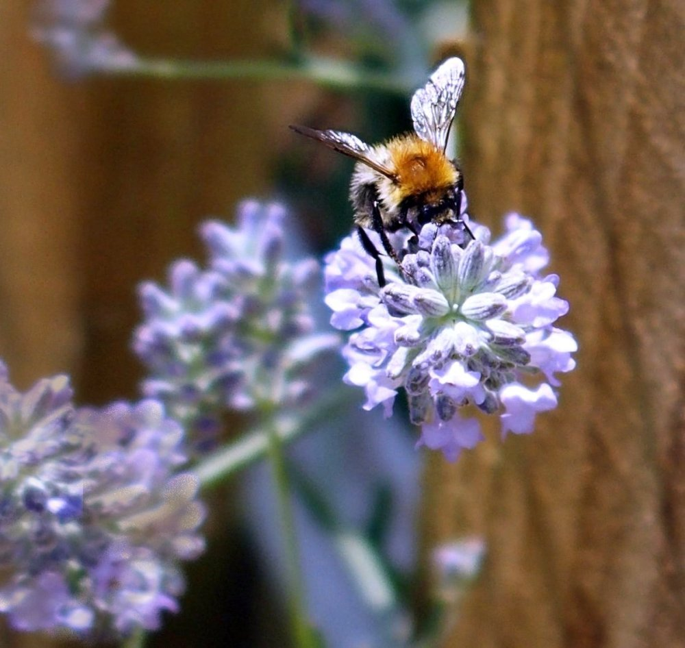 Busy Bees (5/6)