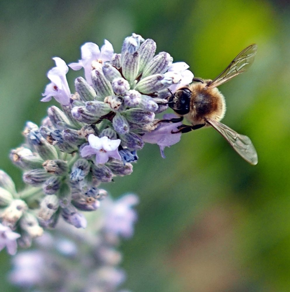 Busy Bees (2/6)