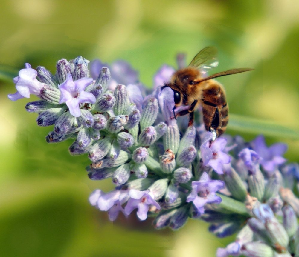 Busy Bees (1/6)