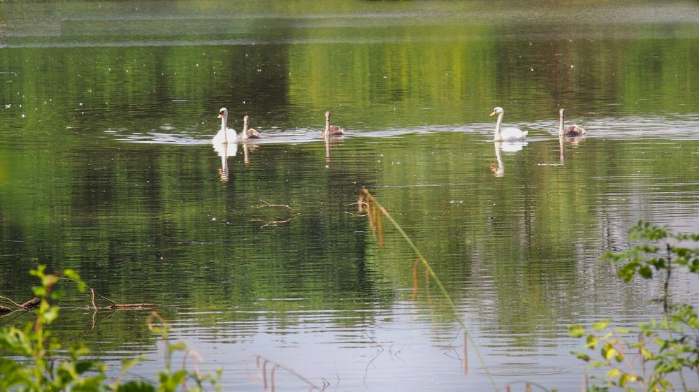 Once More Unto the Pond, Dear Friends (4/6)