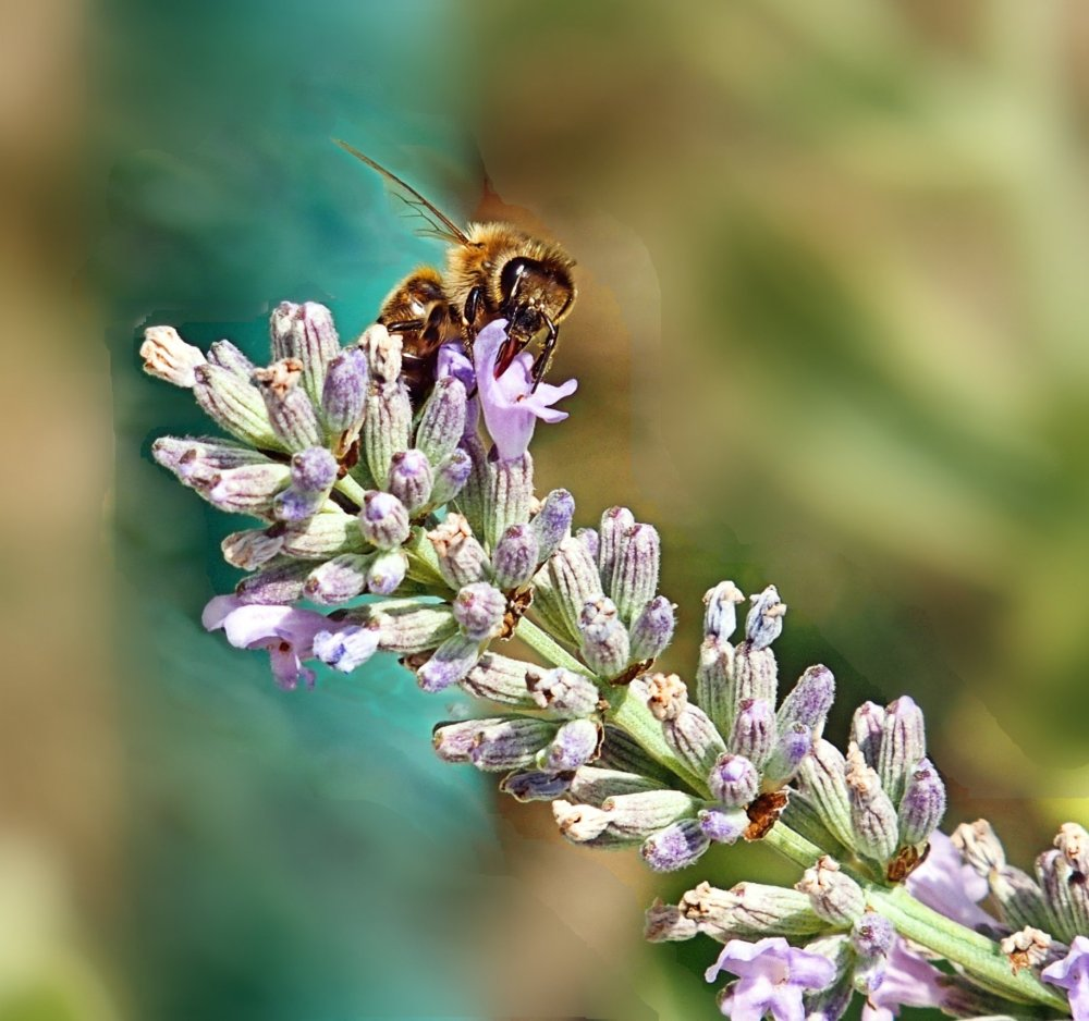 Busy Bees (3/6)