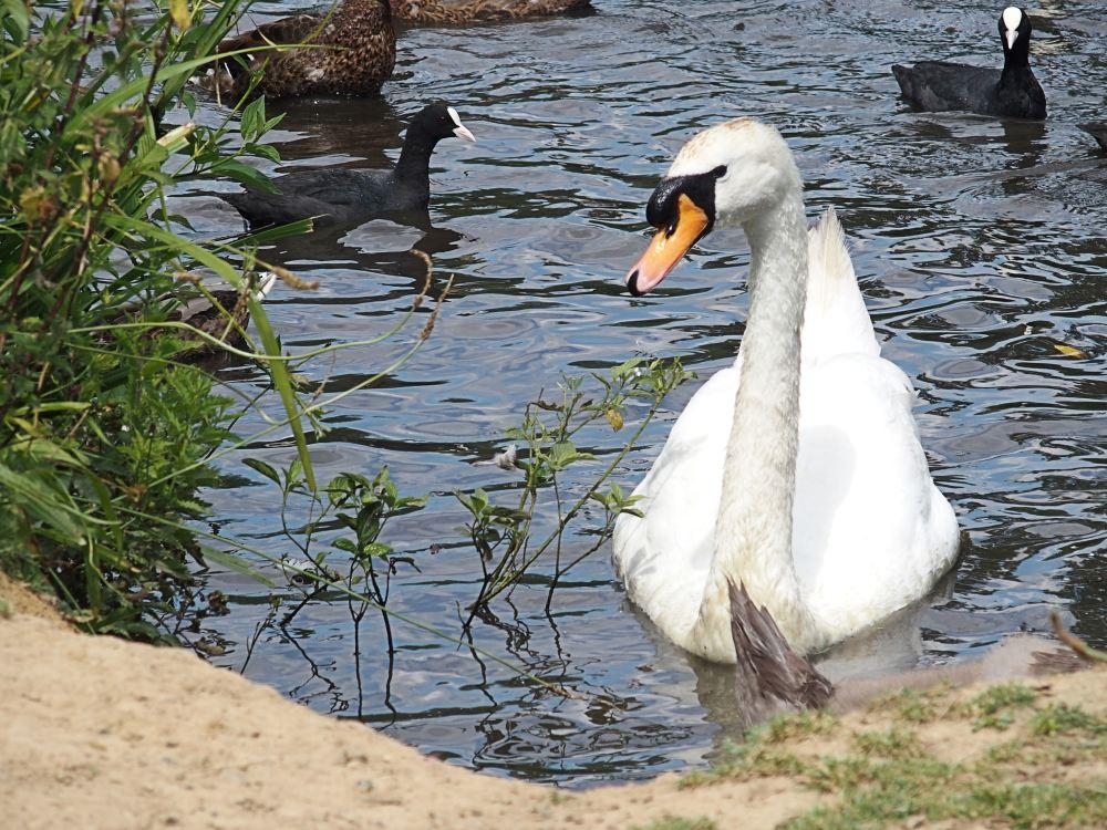 Pond [er] Again (3/6)