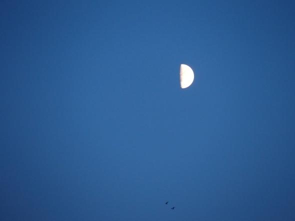 moon & birds