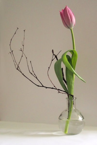 tulip and twigs 2