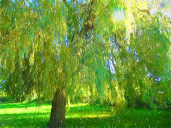 Weeping Willow2