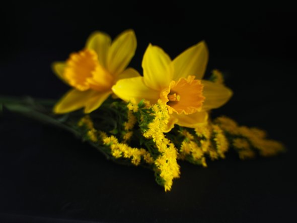 Daffs and Solidago